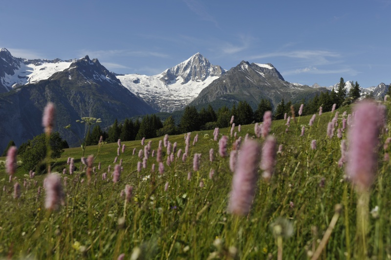 Alps in Summer