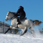 Kentucky Mountain Horse - trained to ride and drive