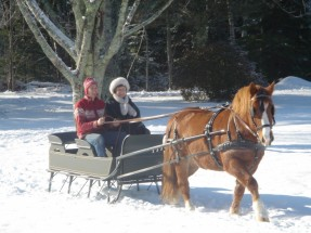 Chris & Crystal Driving Their Trusty Horse Romeo at Their Home in Cushing, ME